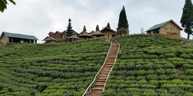 Samal Valley tea estate in Ilam, Nepal