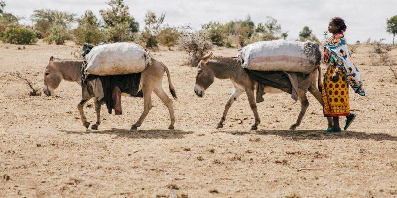 Donkeys carrying produce during Kenyan drought