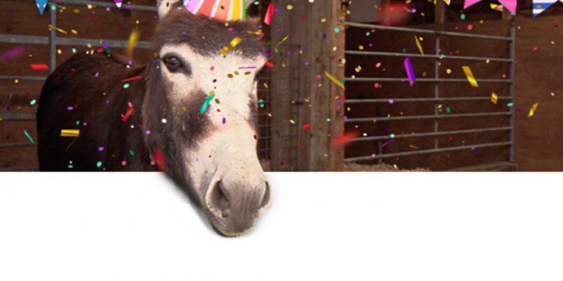 Donkey having a birthday