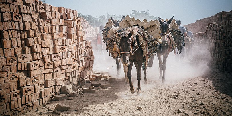 Two horses working in an Indian brick kiln