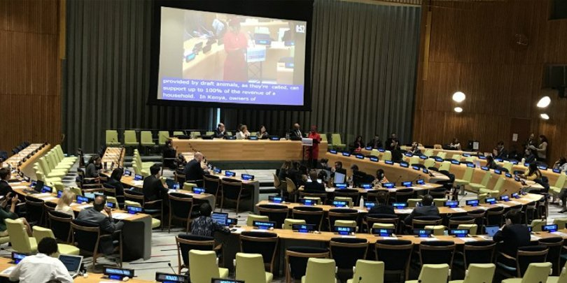 Brooke addressing the UN High Level Political Forum Plenary on the importance of working equids