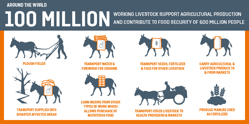 The contribution of animals to food security