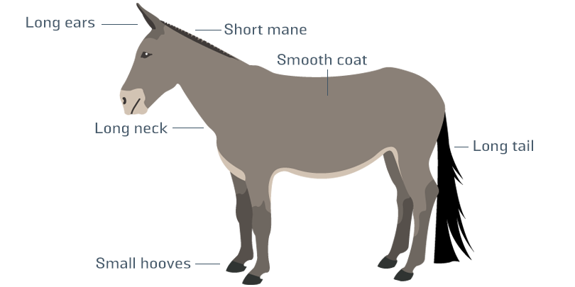 Mule infographic