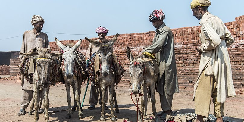 Working donkeys in Pakistan