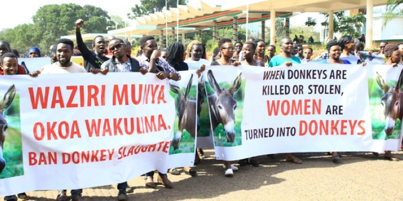 Local protest against the donkey skin trade in Kenya