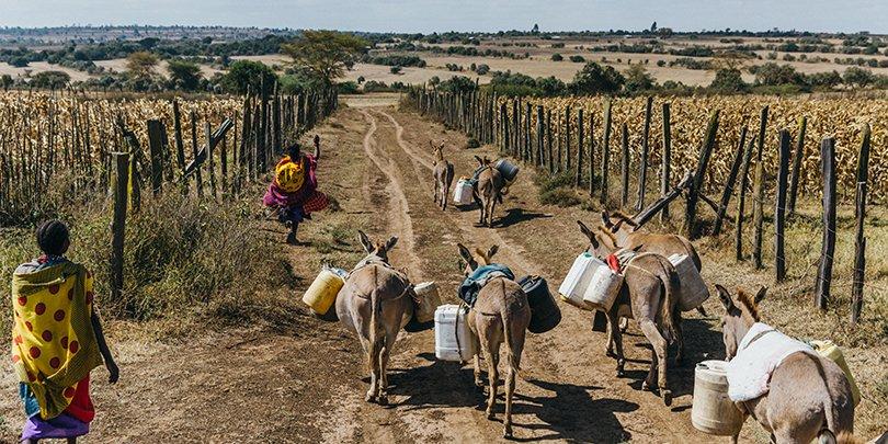 Donkeys transporting water in Kenya
