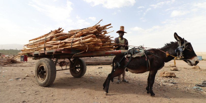 A donkey struggles to balance an overloaded cart in painful, unsuitable harness in rural Ethiopia.