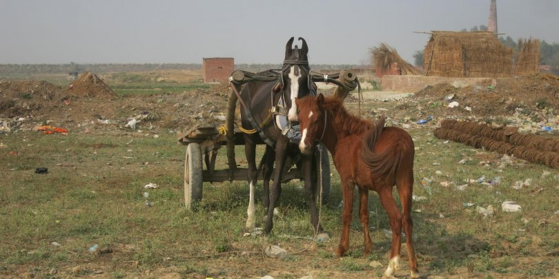 Locally-constructed cart and harness on a horse at an Indian brick kiln.