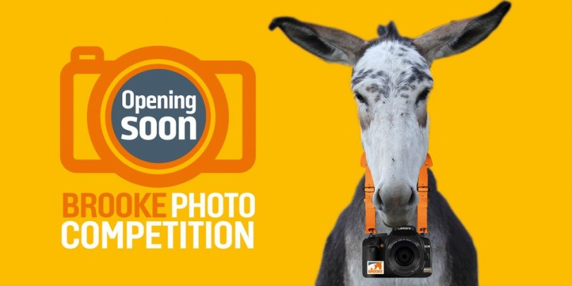 Brooke photo competition coming soon