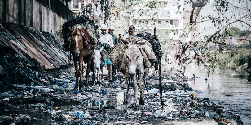 Horses and donkeys collecting rubbish in a New Delhi slum, India
