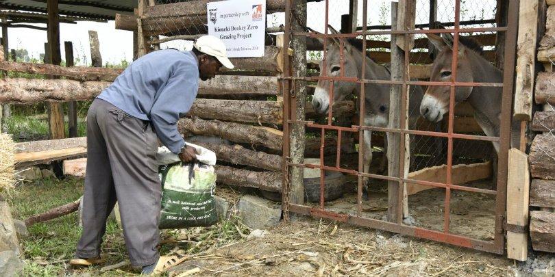 Member of Ndiguini SHG donkey zero-grazing unit