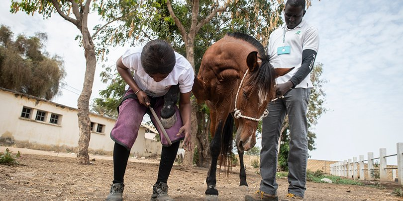 Fatou Toure working with a horse