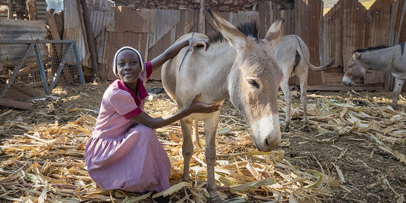 A girl and a donkey