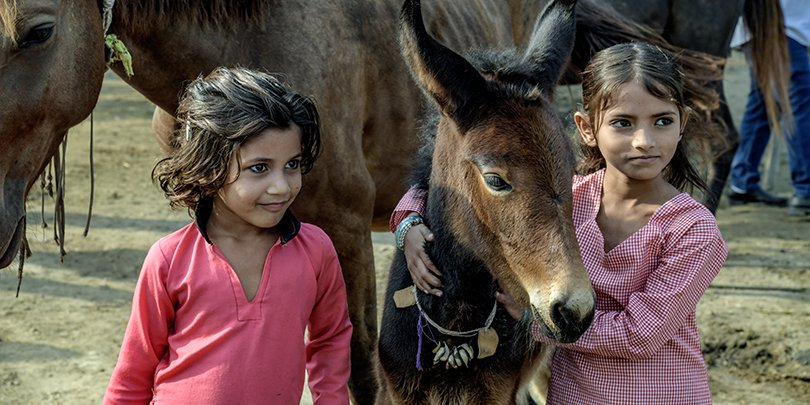 Girls in India with a foal and mare