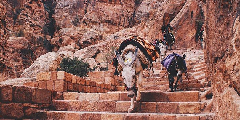 Donkeys in Petra Park, Jordan