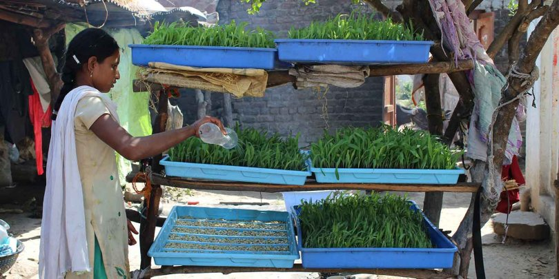 Local woman watering her crops, innovatively stacked using household items.