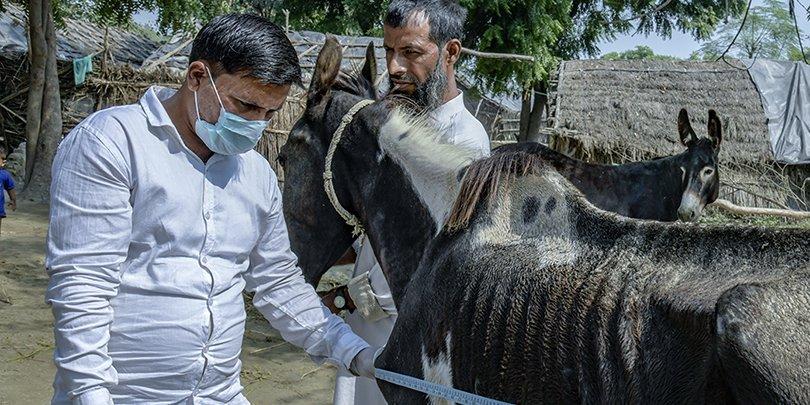 Animal Health Practitioner