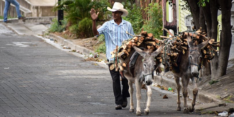 Man and working donkey in Nicaragua