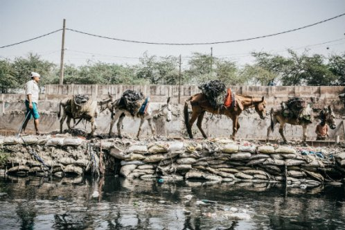 Four equines working together in India