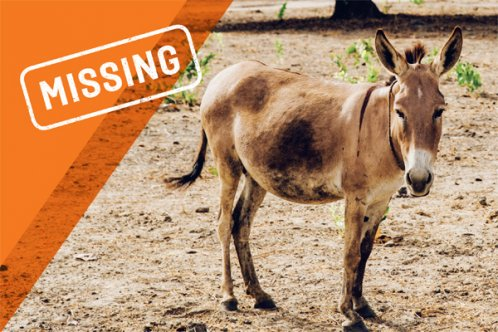 Missing. Donkeys stolen for their skins