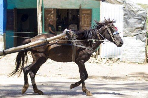 Gharry horse, Ethiopia