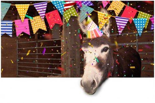 Donkey with birthday hat