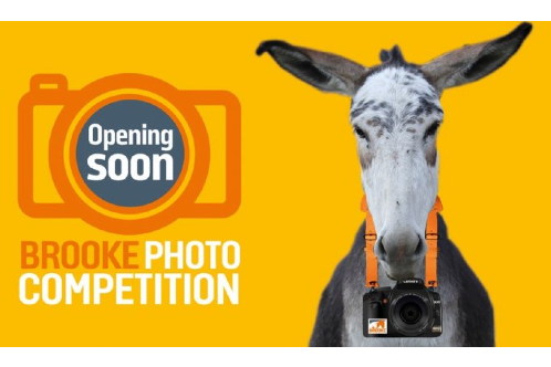 Equine photo competition