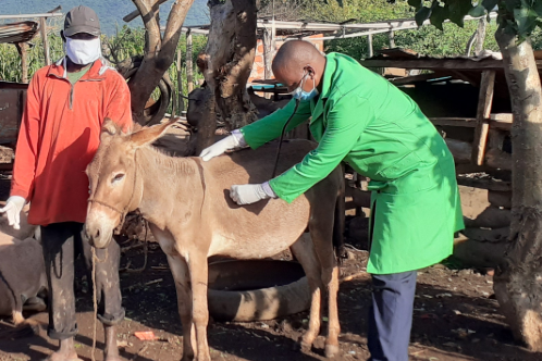 Dr James Kithuka with a donkey
