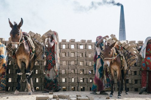 Donkeys carrying bricks in India