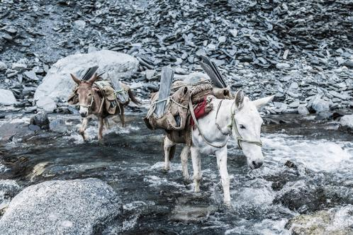 Equines carrying slate across a river