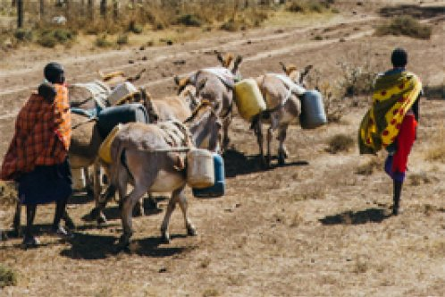 Donkeys and owners transport water in Kenya