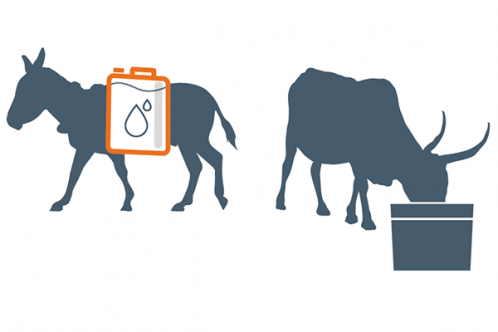 Illustration: donkey transporting water for cattle