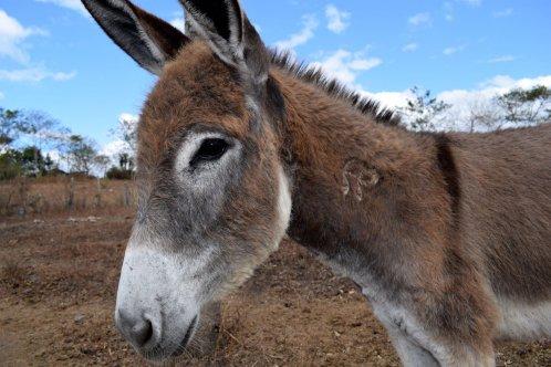 Donkey in Nicaragua, by Jo Somoto