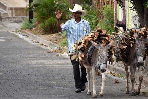 Donkeys carrying firewood