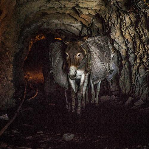 Pakistan coal mine donkey