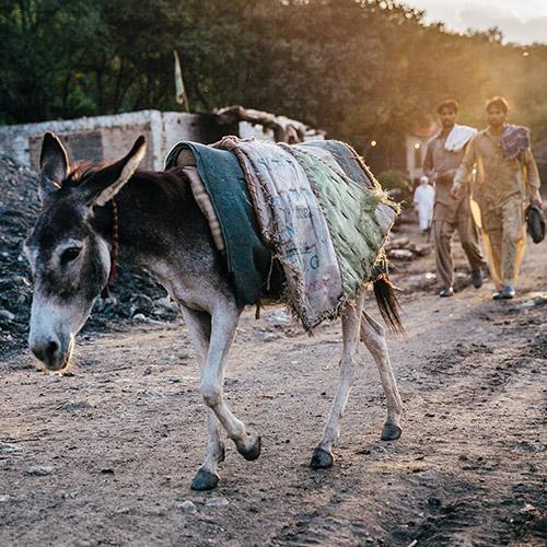 A coal mine donkey at sunset