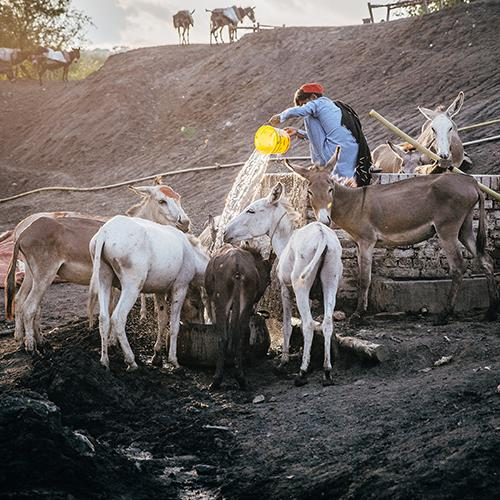 An owner providing water for equines working at a coal mine in Pakistan