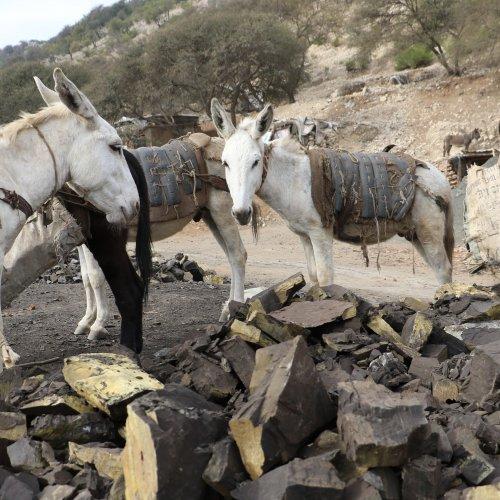 Coal mine donkeys in Pakistan