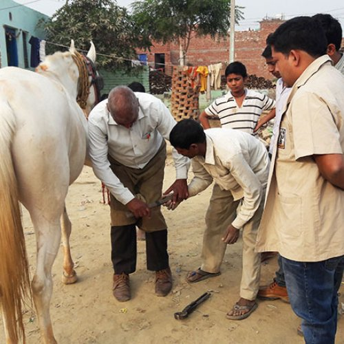 Farriery training in India
