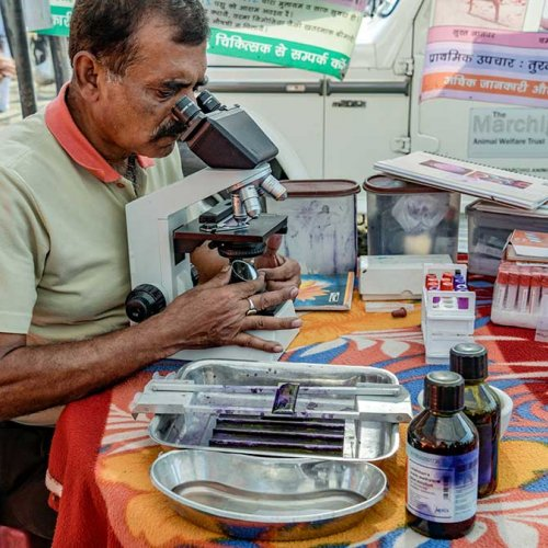 Brooke testing blood samples at equine fair in India