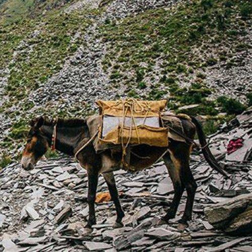 Horse at a slate mine