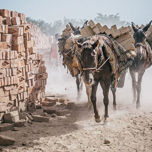 Two horses in an Indian brick kiln