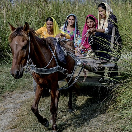 Women horse owners at work