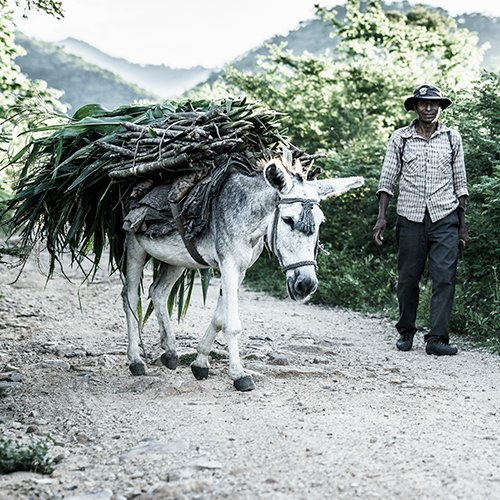 A horse and its owner transporting wood from a nearby forest. Credit/Copyright - Enrique Urdaneta