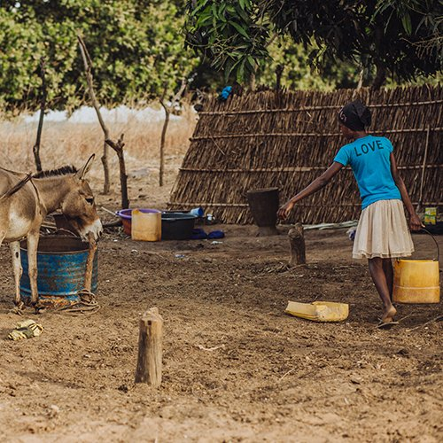 Girl and donkey in Senegal
