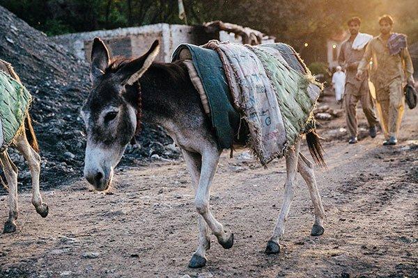 Coal mine donkey