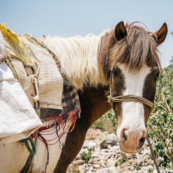 War horse facts | Brooke