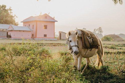 A horse in Nepal