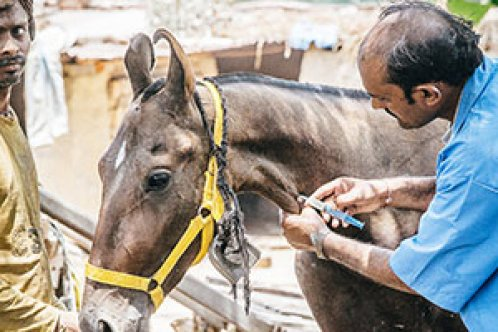 A Brooke vet and owner treating a working animal