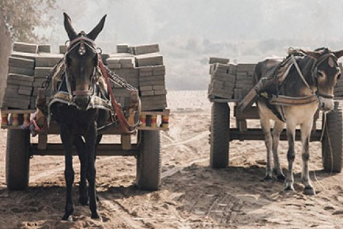 Two equines pulling carts loading with bricks
